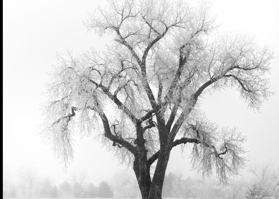 Colorado, landscape, winter, photograph
