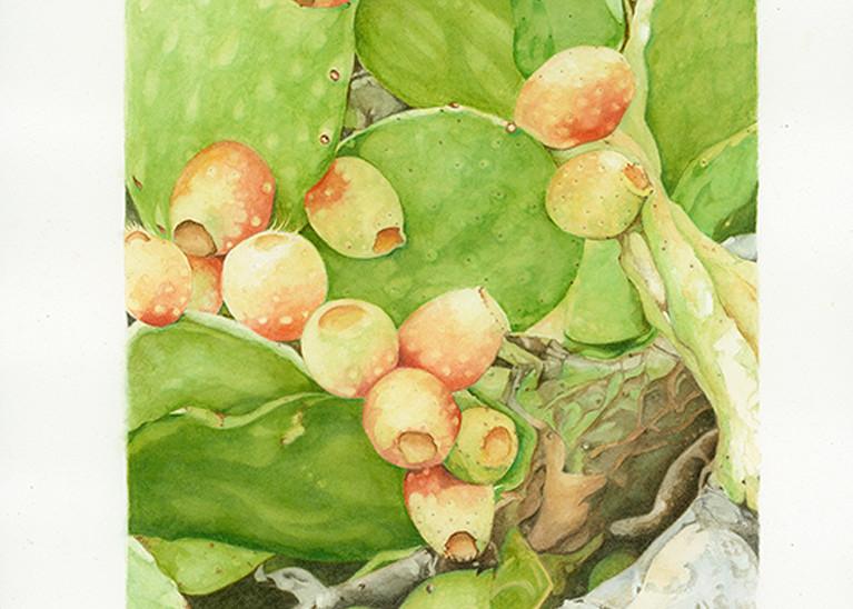 Italian Cactus Art | Digital Arts Studio / Fine Art Marketplace