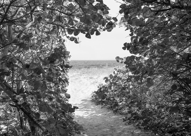 If You Love Trees Collection - bw   Path to the Sea, Delray Beach - bw. Beautiful pathway to the beach. Fine art black and white photograph by David Zlotky.