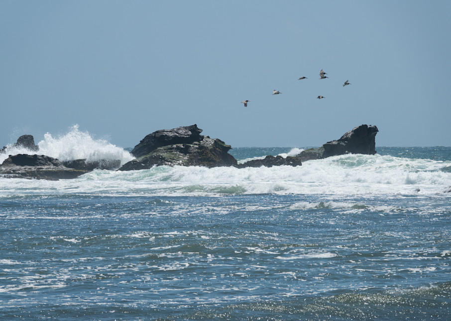 Pelicans over a pounding surf - shop prints   Closer Views