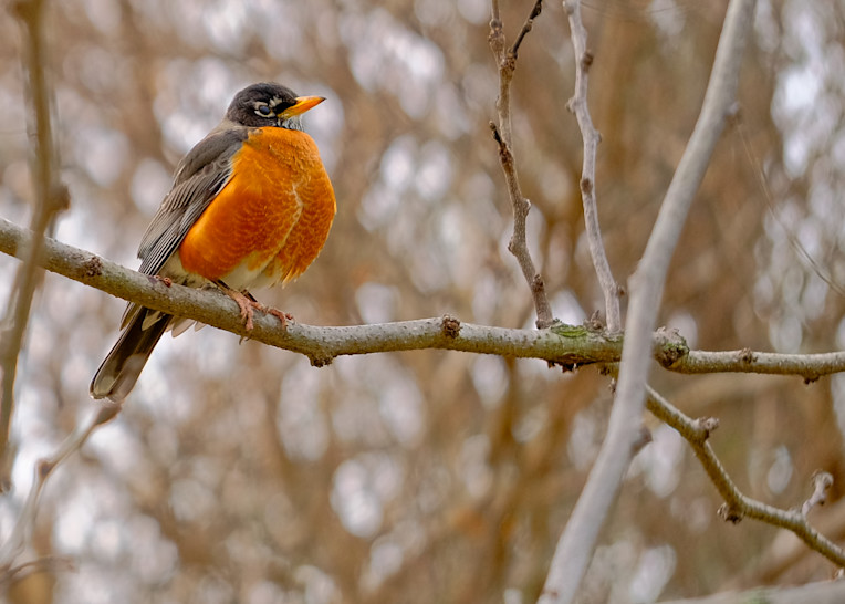 Bird 2 Photography Art | Drone Video TX