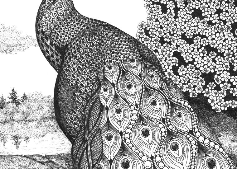 Posh Peacock