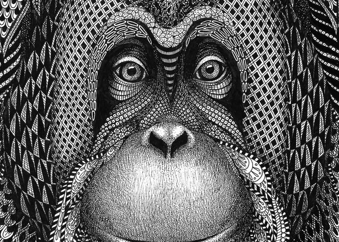 Katie (Orangutan)
