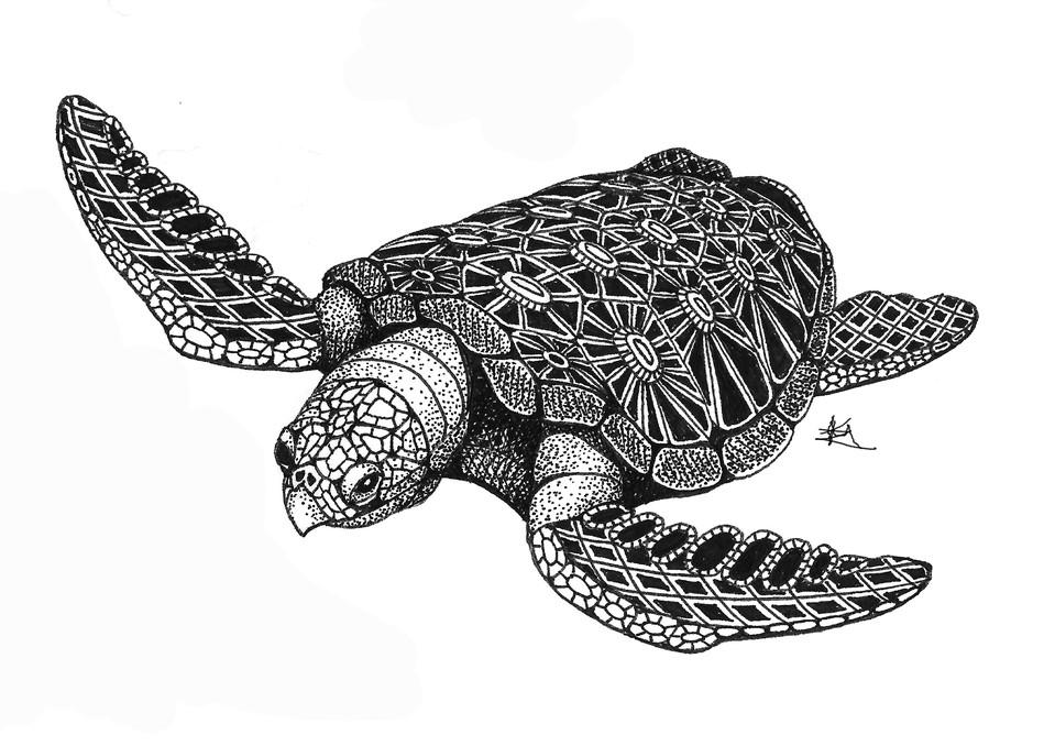 Sea Turtle (top)