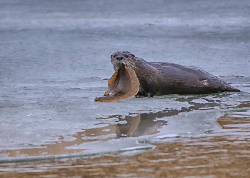 Cape Poge Sea Otter And Fluke Art | Michael Blanchard Inspirational Photography - Crossroads Gallery