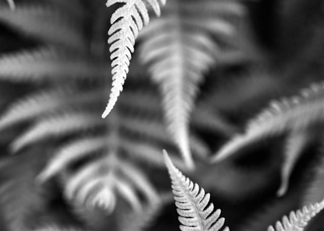 Fern Layers by Rick Berk
