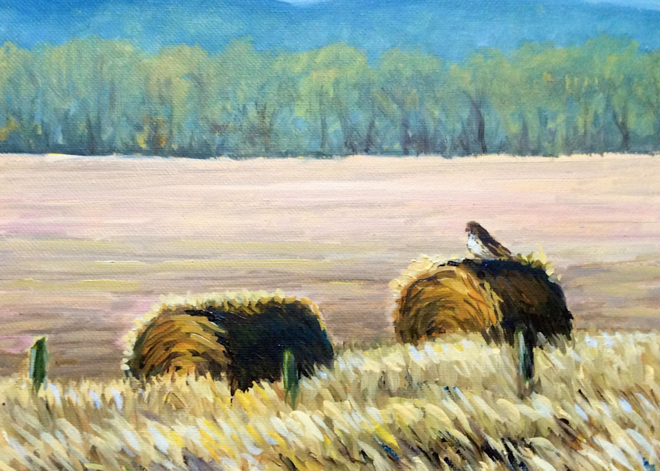 Hawk on a hay bale Fine Art By Hilary J. England
