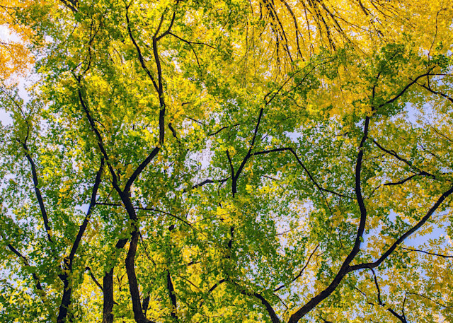 Central Park Gathering | Kirby Trapolino Fine Art Photography