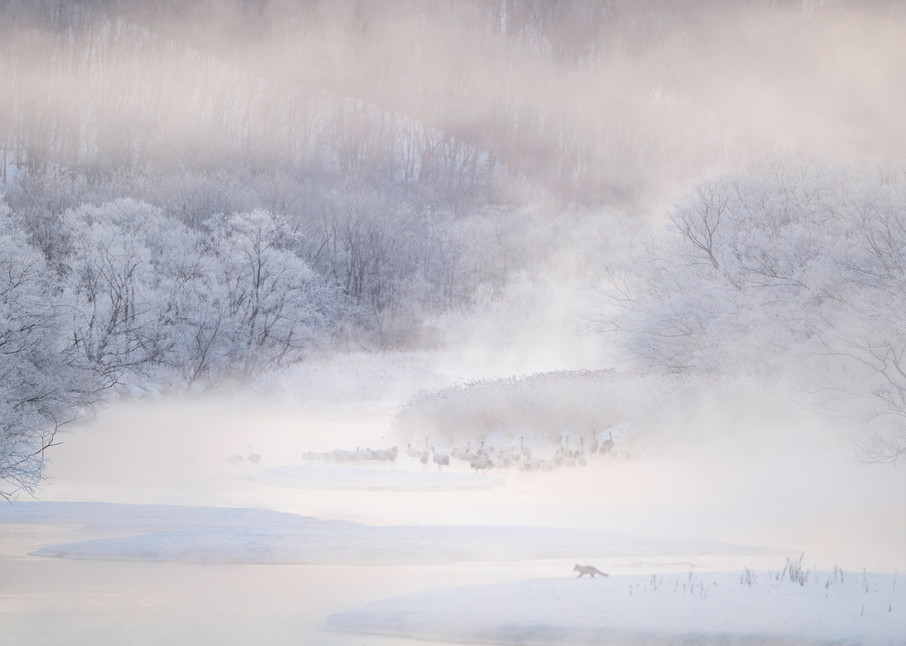 Cranes in the misty river
