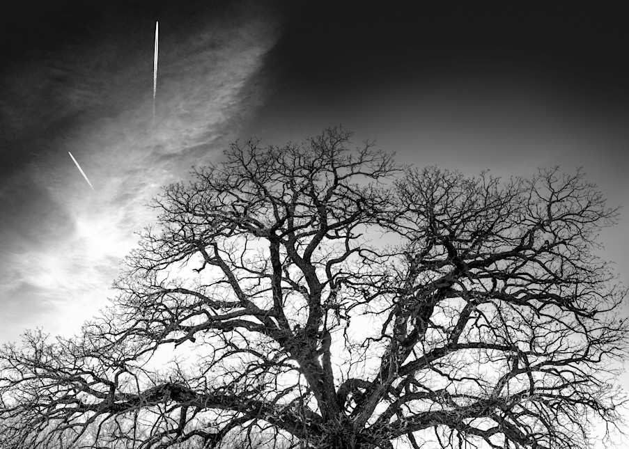 If You Love Trees Collection - bw | Contrails - bw. This fine art black and white photograph is by David Zlotky