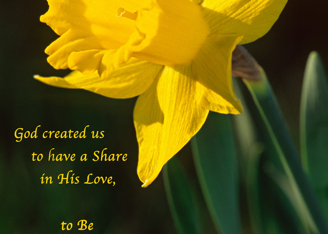 """Sunny daffodil with """"Loving Gifts"""" quote - shop prints 