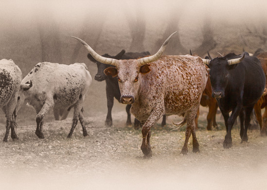 Staredown Photography Art | JL Grief Fine Art Photography