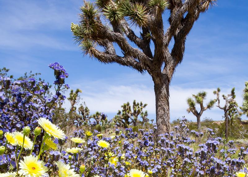 Mojave Spring Color Photography Art | Josh Kimball Photography