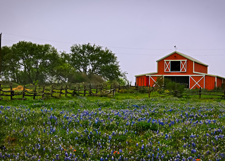 Bluebonnets And Barn 2 Colorful Photography Art | Drone Video TX