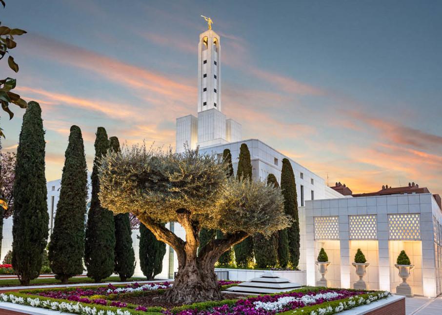 Madrid Spain Temple - Olive Tree