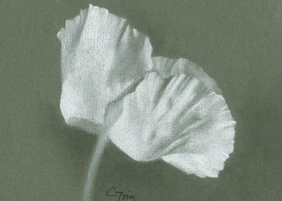 Poppy, White Fan Art   Cristina Goia