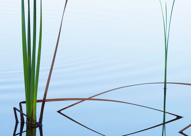 Constance Mier Photography - fine art prints of nature's abstract simplicity
