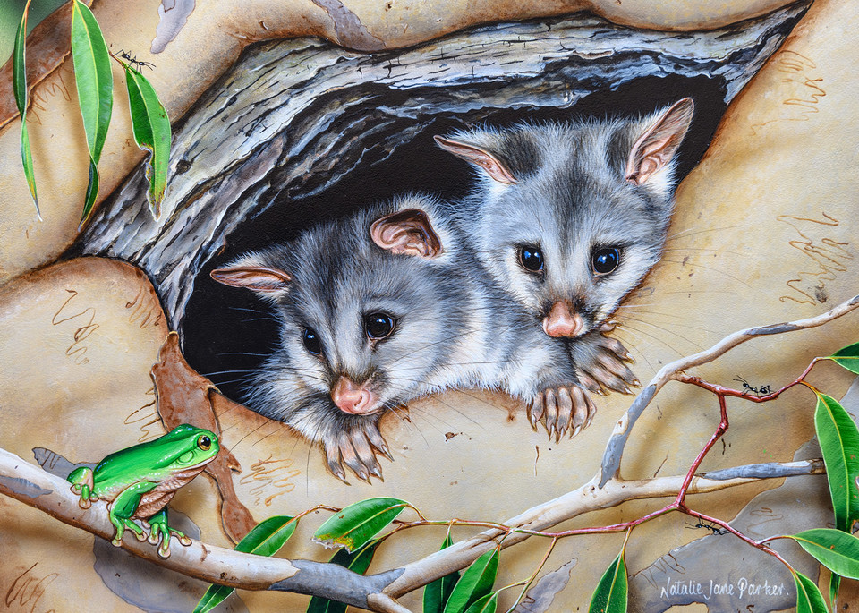 Cosy Home - Common Brushtail Possum with common green tree frog Natalie Jane Parker Australian Native Wildlife