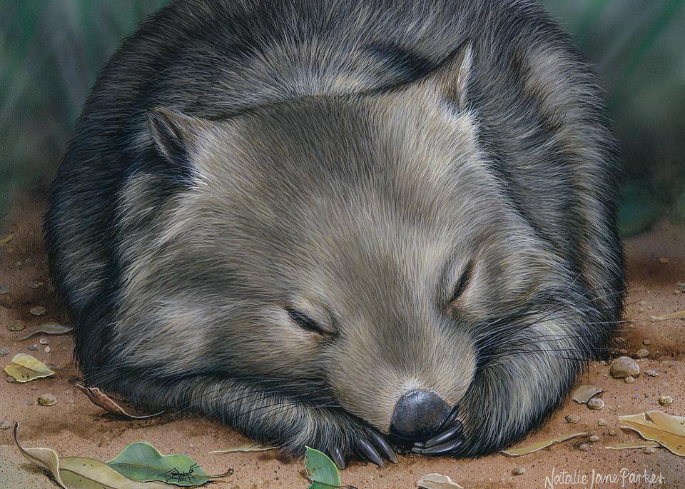 Sleeping Soundly - Sleeping Common Wombat Natalie | Jane Parker | Australian Native Wildlife