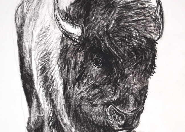 Buffalo 300dpi Art | Amy O'Hearn Art