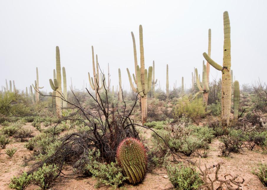 DP435 Saguaro N.P. Fog