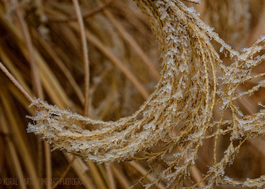 Ice on Fountain Grass Photograph 9438 | Macro Photography | Koral Martin Fine Art Photography