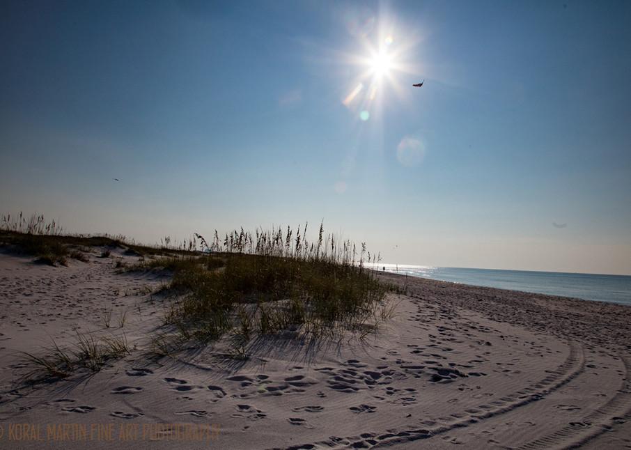 Heron on beach Photograph 1335 FL  | Florida Photography | Koral Martin Fine Art Photography