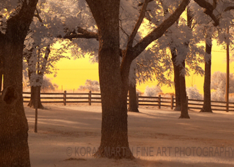 Infrared George Washington Carver Trees Orange  Photograph | Infrared  Photography |  Koral Martin Fine Art Photography