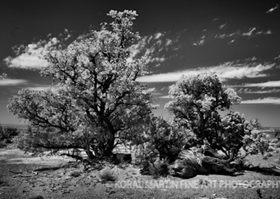 Infrared Canyonlands Tree5657  | Infrared Photography | Koral Martin Fine Art Photography