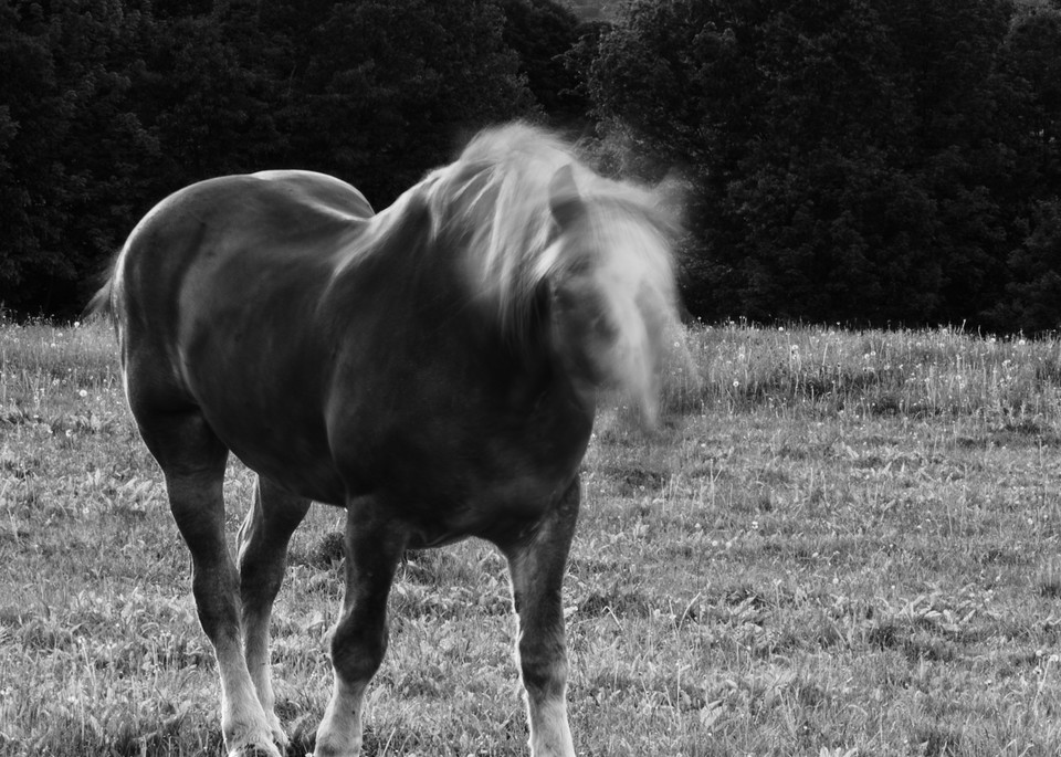 Horse Moves V Photography Art | Nathan Larson Photography