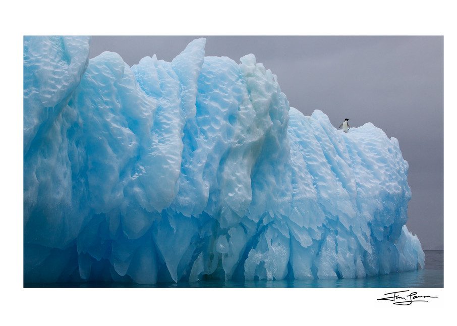 Photograph of an iceberg with an Adelie Penguin.