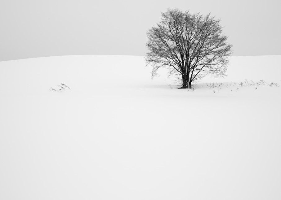 Tree with Grasses