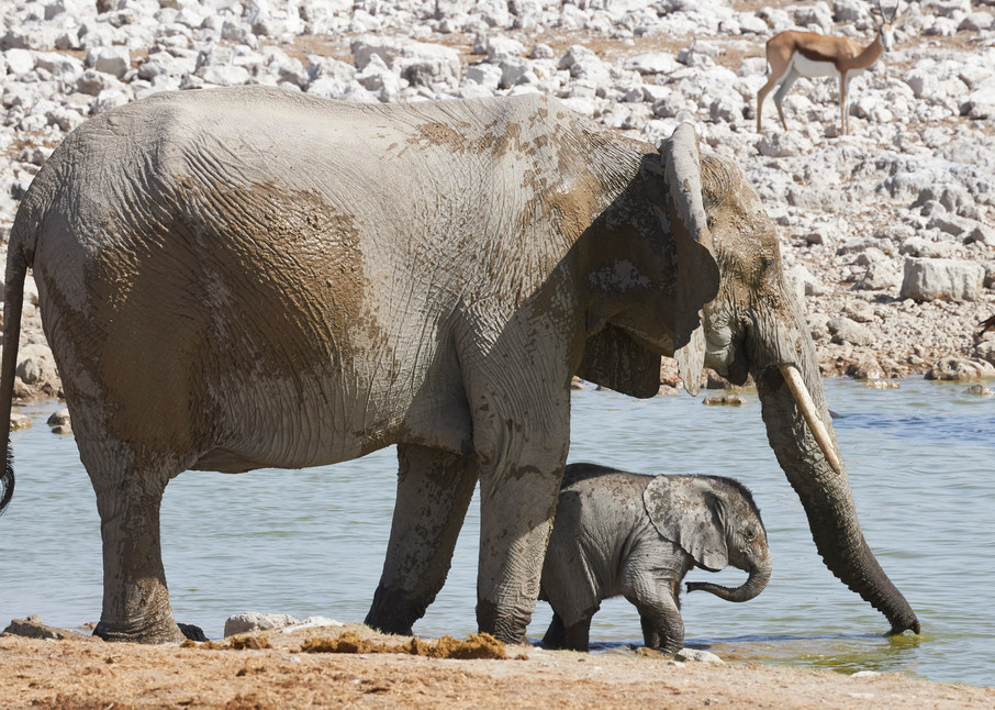 Mother with Baby Elephant