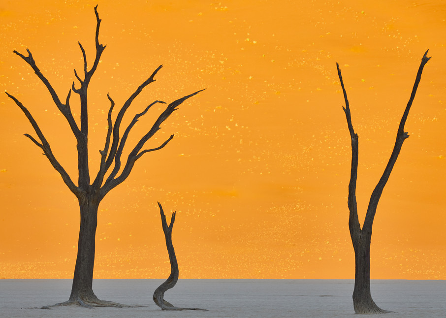 Deadvlei Camel Thorn Tree  Silhouettes #1