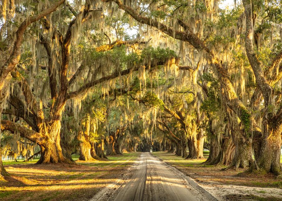 live-oaks-tomotley-plantation-01