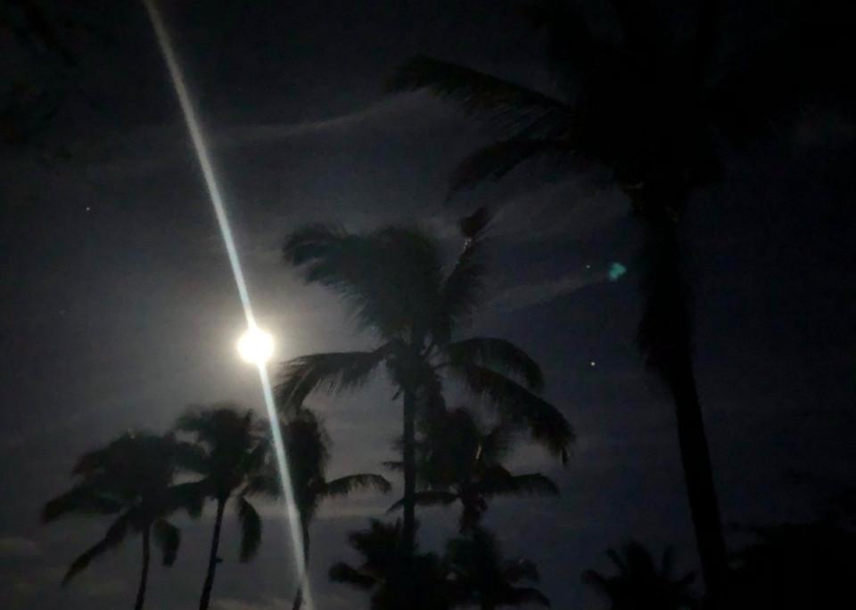 Palms & Moon Ii Photography Art   Brian Ross Photography