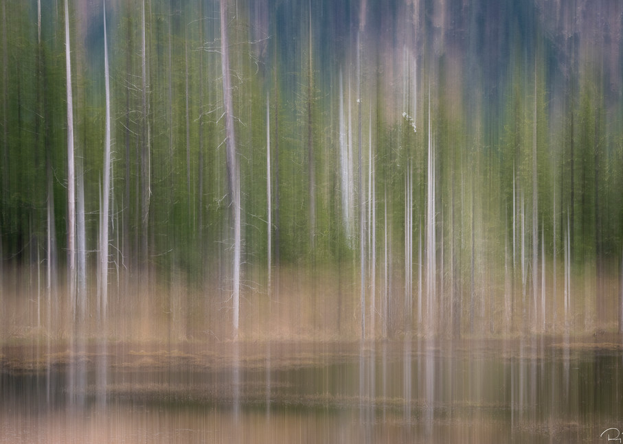 In-camera motion blur of spruce trees along marsh in Copper River Delta in Southcentral Alaska. Spring. Afternoon.