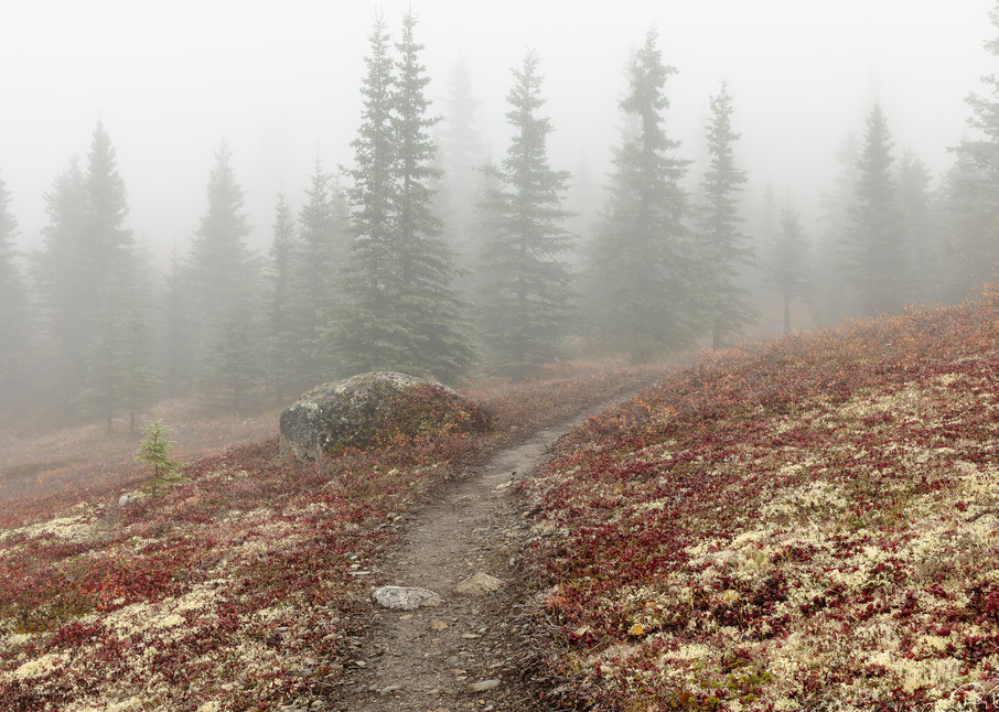 Fog envelops the Curry Ridge trail and peak autumn colors in Southcentral Alaska. Morning.