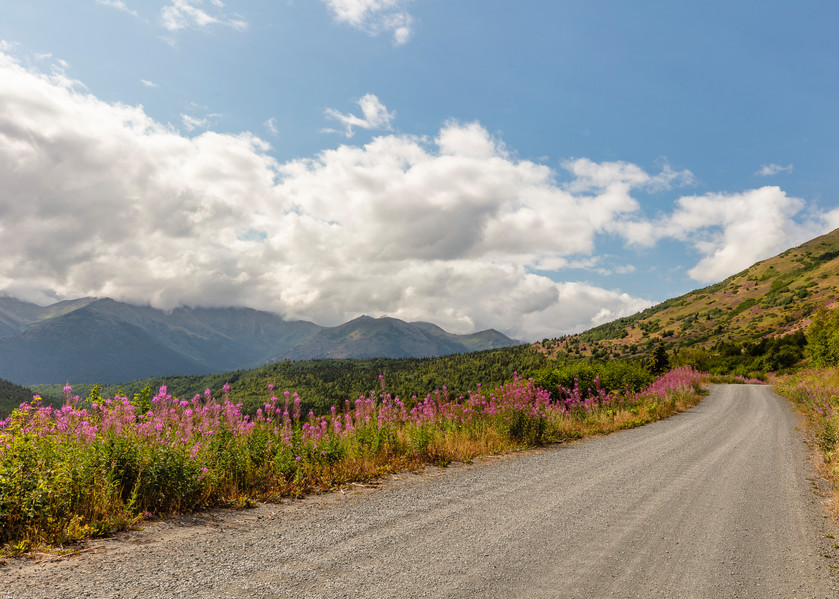 Palmer Creek Road Fireweed Photography Art | Ray Bulson Photography