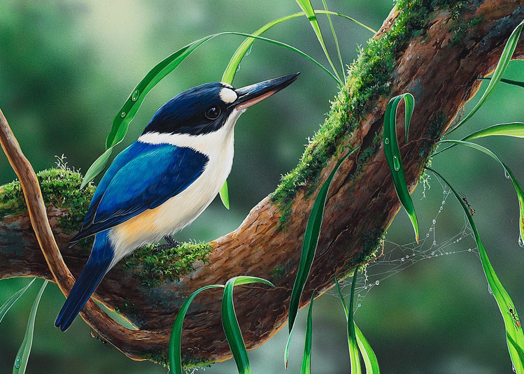 River View - Forest Kingfisher with an eastern dwarf tree frog - Australian Native Wildlife