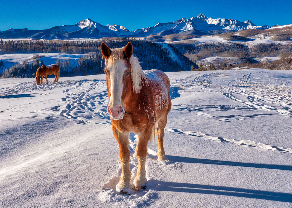 Horse On A Chilly Morning Photography Art | Peter Batty Photography