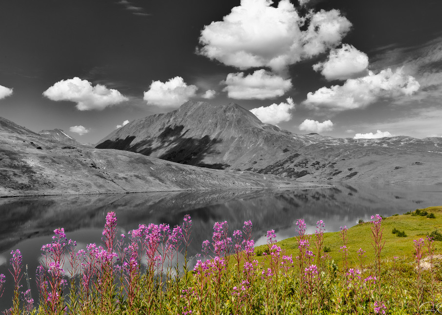 Common Fireweed (Epilobium augustifolium) adorns Lost Lake and the Kenai Mountains in Southcentral Alaska. Summer. Afternoon.