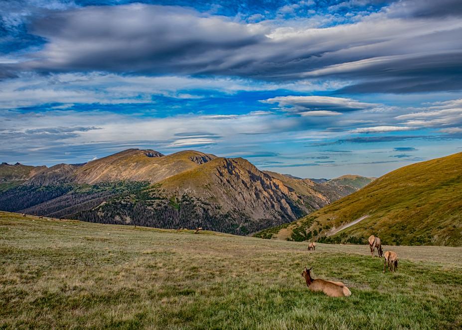Elk In A Meadow Art | Artist David Wilson