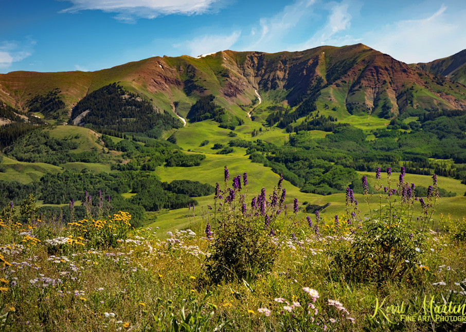 Purple Wildflowers on Snodgrass Trail  Photograph 6734 | Colorado Photography | Koral Martin Fine Art Photography