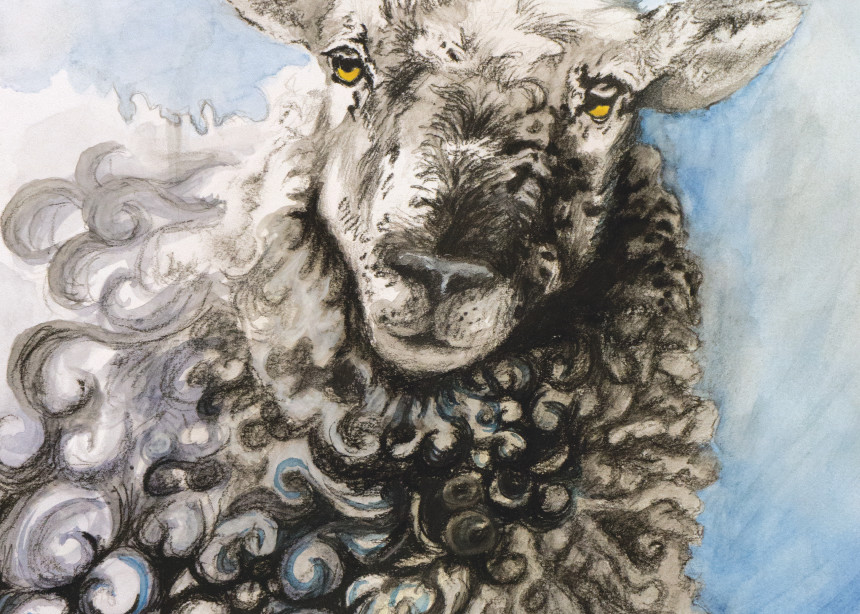 Sheep Curls Art | Kelsey Showalter Studios