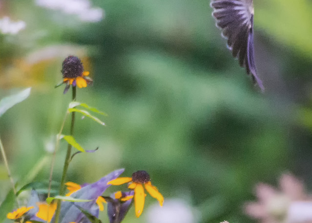 Momma And Baby Goldfinches Art | Drew Campbell Photography