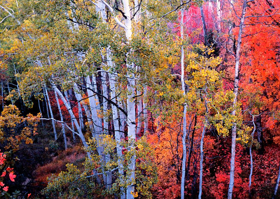 Fall Symphony Photography Art | Craig Primas Photography