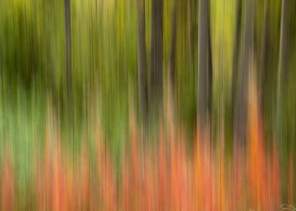 In-camera motion blur of Common Fireweed and trees In Chugach National Forest in Southcentral Alaska. Autumn. Afternoon.
