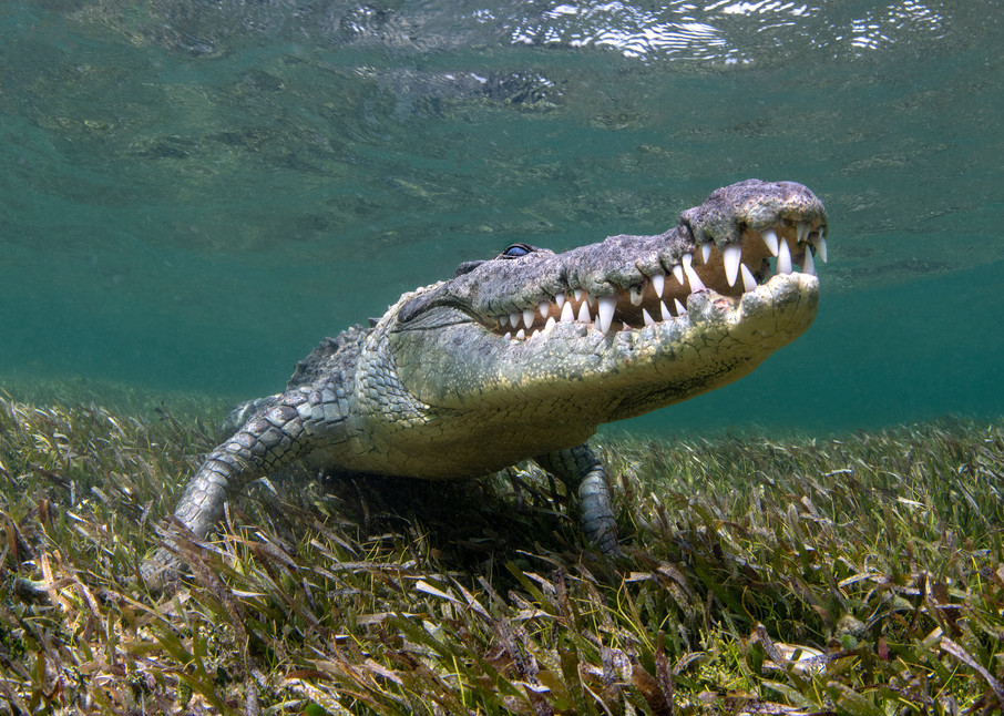 Crocodile Smile is available as a fine art photograph for sale.