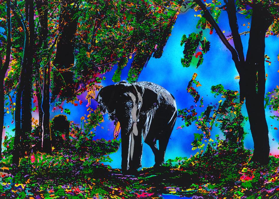 The Blessing | Elephant Art | JD Shultz Art
